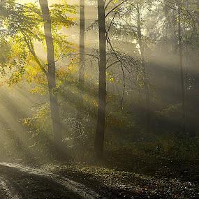 Sluneční paprsky by Jana Černošková - Landscapes Forests ( sunrays,  )