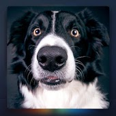Relax Music for Dogs