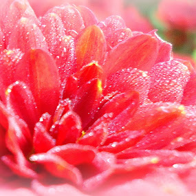 by Dolores Dubravica - Nature Up Close Flowers - 2011-2013