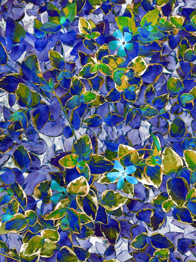 Blue Leaves by Tina Dare - Abstract Patterns ( abstract, pattern, nature, blue, solarized, plants, photo, flower )