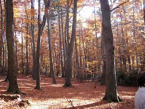 Photo: BB040364 Ojcow - kolory jesieni