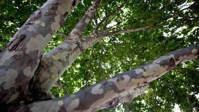 Photo: Trees