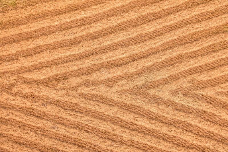 campo di grano di simona_cancelli
