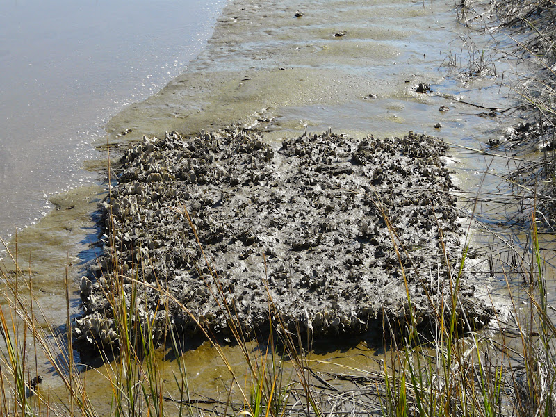 Photo: BMI reefs in 2009