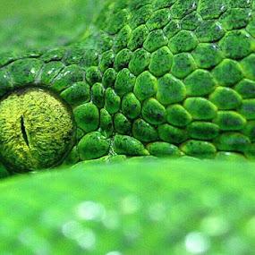 by Jon Hurd - Animals Reptiles