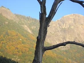 Photo: Bu delikler ağacın sağında görülen ağaçkakan kardeşin marifetidir ve sanat şahaseridir.