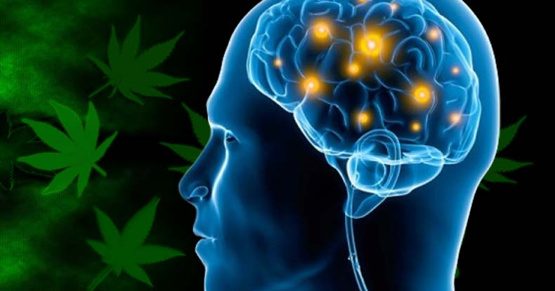 Low Daily Doses Of Cannabis Could Improve Memory