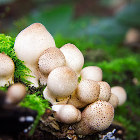 by Leigh Brooksbank - Nature Up Close Mushrooms & Fungi ( mushroom, forest floor, nature up close, funghi, toadstool )