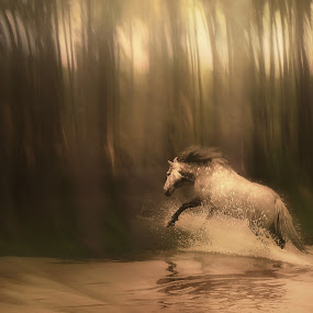 Freedom of the Forest by Jennifer Woodward - Digital Art Places ( water, animals, equine, horses, horse, wildlife, trees, forest )