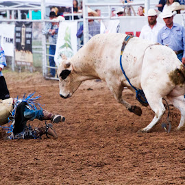 Bull rider on the ground by Scott Thomas - Sports & Fitness Rodeo/Bull Riding ( cowboy, fall, buck, rodeo, bull )