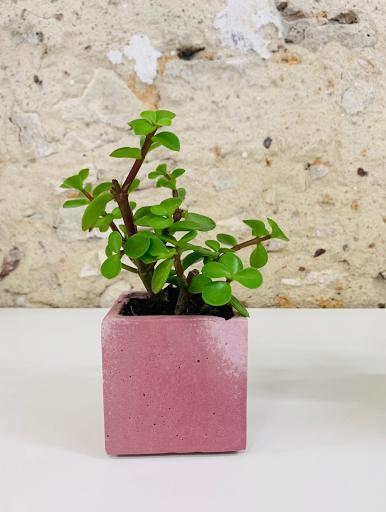 plante dans pot en béton rose