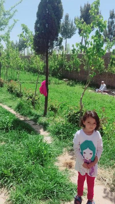 Noorzai brothers garden