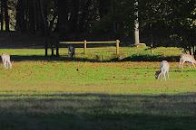 Parco Brughiera Briantea, Lentate sul Seveso, Italy