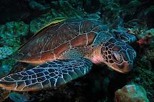 Turtle Divers, El Nido, Philippines