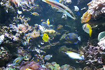 aquarium tropical de la porte dorée, Paris, France