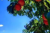 Thomas Orchards, Kimberly, United States