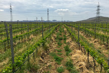 Fireland Vineyards, Novxani, Azerbaijan