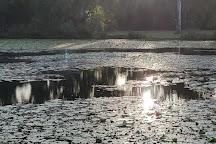 Baldwin Swamp Environment Park, Bundaberg, Australia