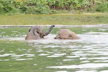Elephant Conservation Center, Sayaboury, Laos