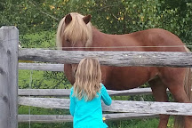 Vermont Icelandic Horse Farm, Moretown, United States