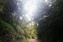 Parc National d'Andohahela, Tolanaro, Madagascar