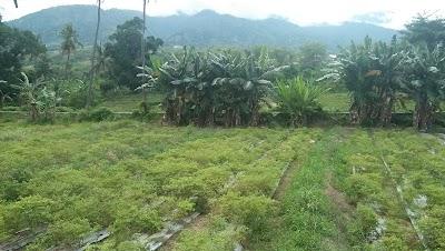 Lapangan 2 Gawalise Duyu