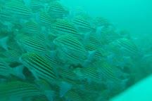 Sea Horse Divers, Unawatuna, Sri Lanka