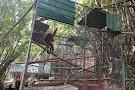 The Gibbon Rehabilitation Project (GRP)