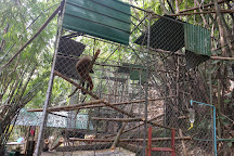 The Gibbon Rehabilitation Project (GRP), Thalang District, Thailand