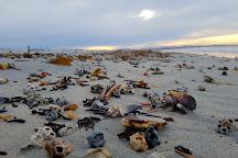 Bertha's Beach, Mount Pleasant, Falkland Islands