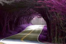 Tree Tunnel, Kalaheo, United States