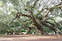Visit Angel Oak Tree on your trip to Johns Island or United