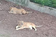 Kaliningrad Zoo, Kaliningrad, Russia