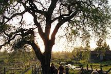 Ancient Oak Cellars, Santa Rosa, United States