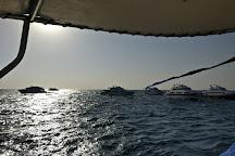 Elphinstone Reef, Marsa Alam, Egypt