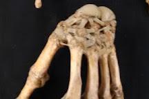 Museo Di Anatomia Comparata, Bologna, Italy