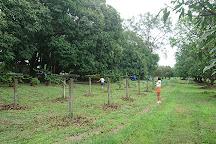 Rosa Farms, San Marcelino, Philippines