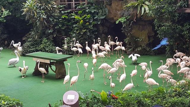 Jurong Bird Pk