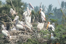 Kolleru Bird Sanctuary, Kaikaluru, India