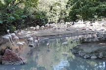Parco Natura Viva, Bussolengo, Italy