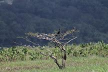 Le Morpho, Roura, French Guiana