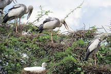 Vettangudi Bird Sanctuary, Sivaganga, India