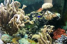 Aquarium, Crikvenica, Croatia
