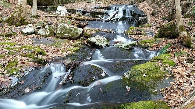 Worthington State Forest