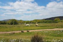 Mountain View Ranch, Tongwynlais, United Kingdom