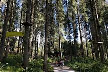 Agility Forest San Martino di Castrozza, San Martino di Castrozza, Italy