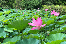 Lotus Pond, Zhongzheng District, Taiwan