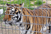 National Tiger Sanctuary, Saddlebrooke, United States