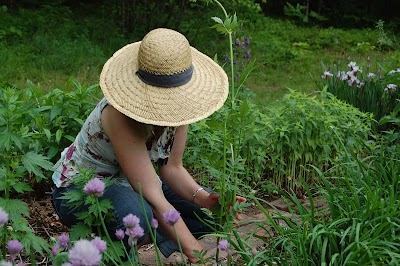 Wintergreen Botanicals, LLC ~ Maria Noel Groves, Clinical Herbalist