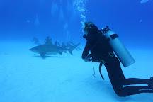 Bull Sharks Diving Center, Playa del Carmen, Mexico
